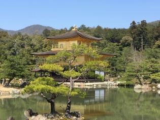 Kinkaku-Ji, the Golden Pavilion, during Spring, glimmering in the sunlight in Kyoto, in Japan