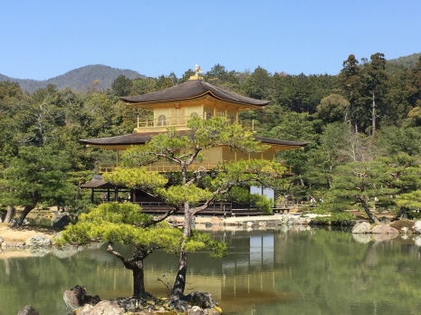 Kinkaku-Ji, the Golden Pavilion, during Spring, glimmering in the sunlight in Kyoto, in Japan