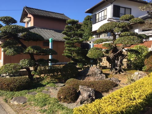 traditional Japanese house with sculptured Japanese pine trees