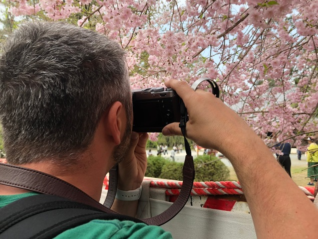 Super Sake Boy taking a photo of the sakura, cherry blossom at Daigo-Ji in Kyoto in Japan
