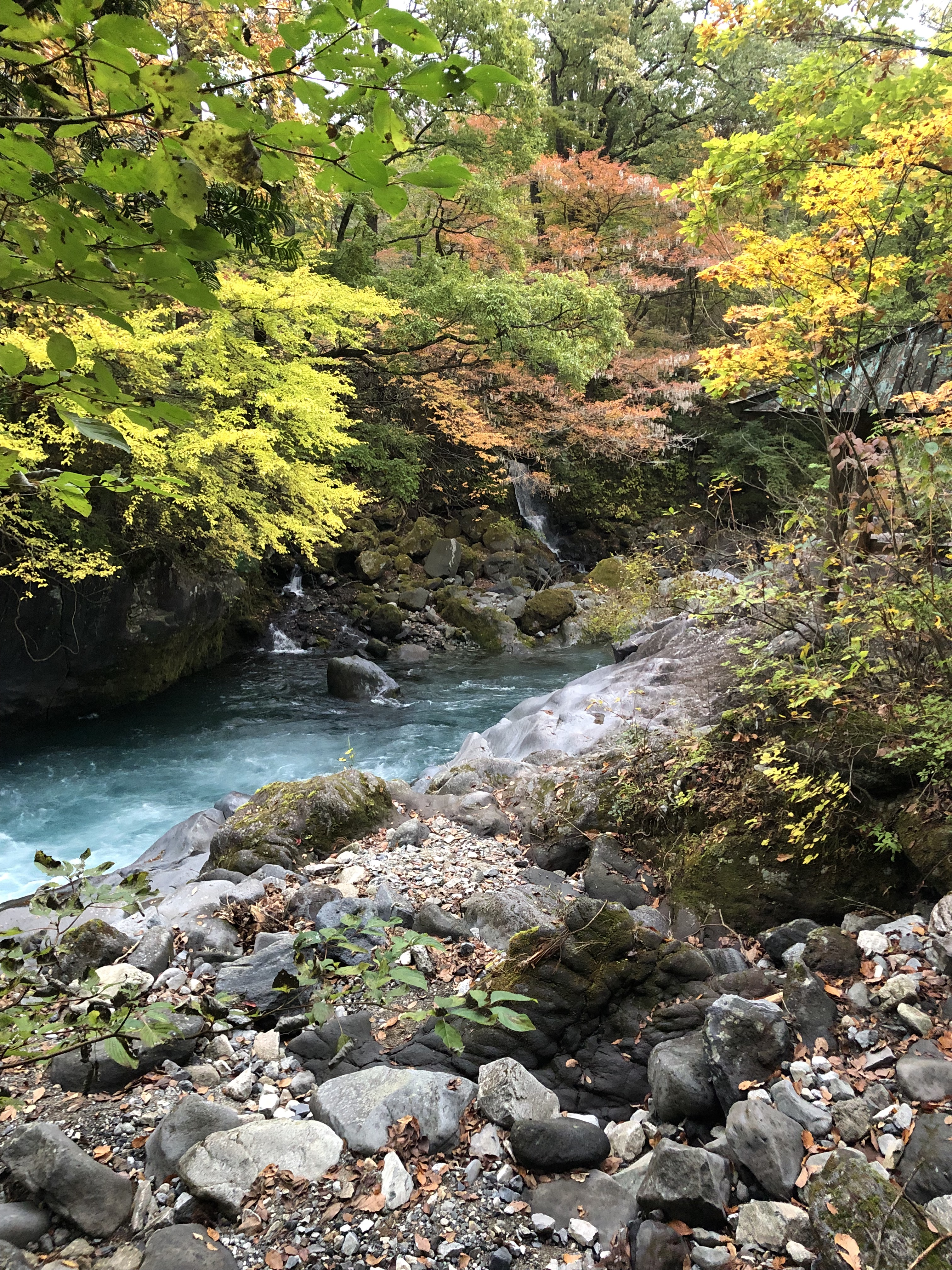 The rapidly flowing waters, running through the autumn leaved trees, with a rocky riverside area in the foreground. Nikko, Japan